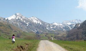 En busca del oso pardo en Asturias: parque natural de Somiedo