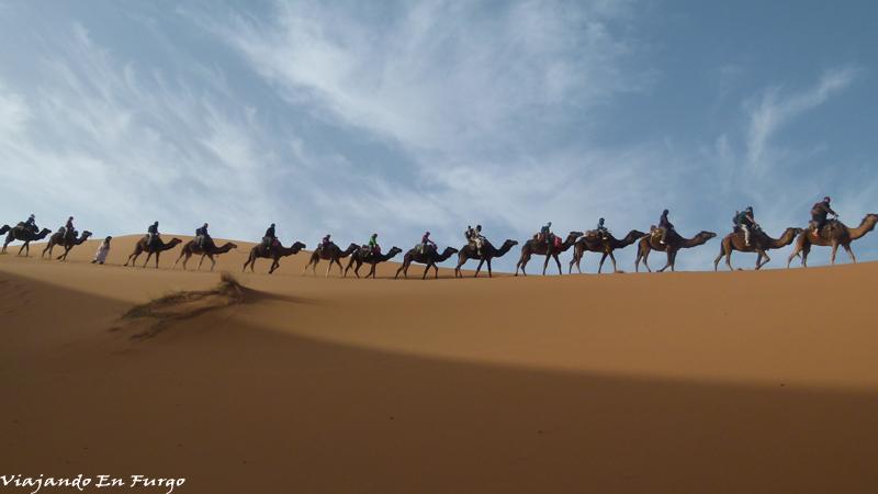 Dromedarios Marruecos