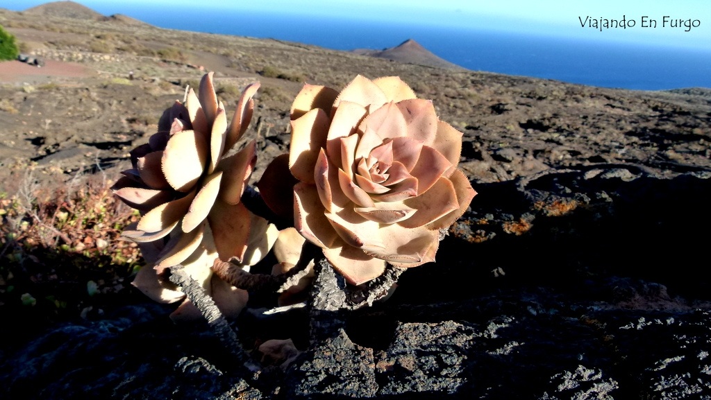 La sanjora, imagen del Geoparque El Hierro