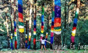 El bosque pintado de Oma, un bosque de cuento en Euskadi